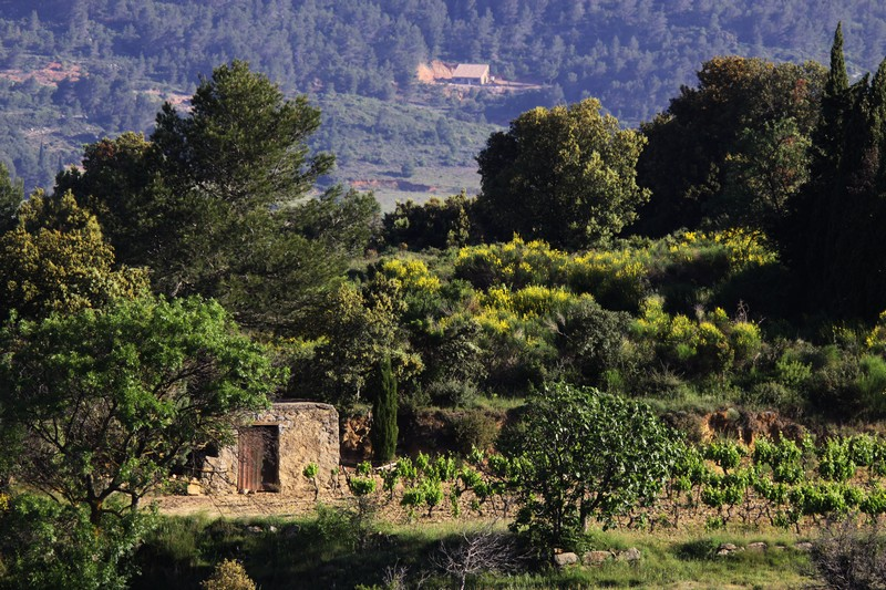 vignes en CORBIÈRES