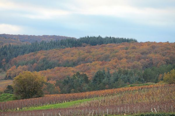 Vignes et forêts ...