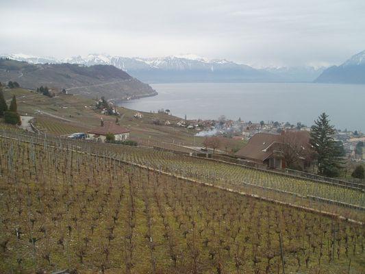 vignes, lac et montagnes = Suisse!