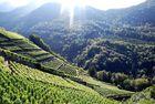 Vignes suisses