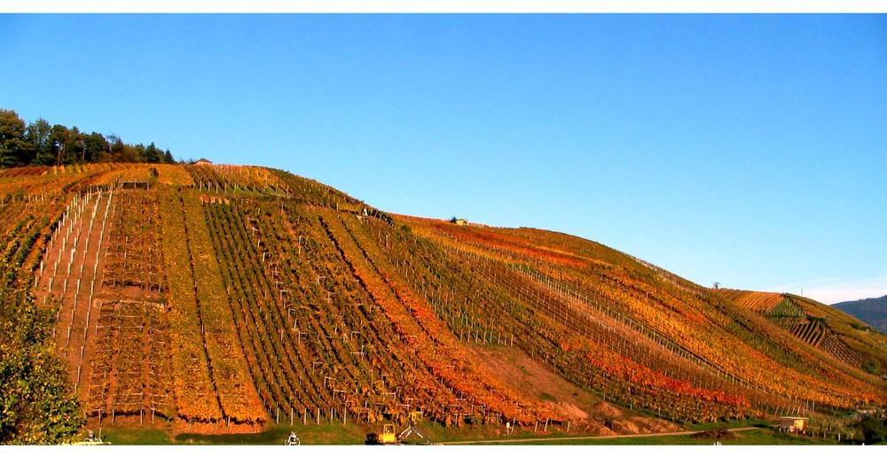 Vignoble dans les couleurs d'automne   - '7'