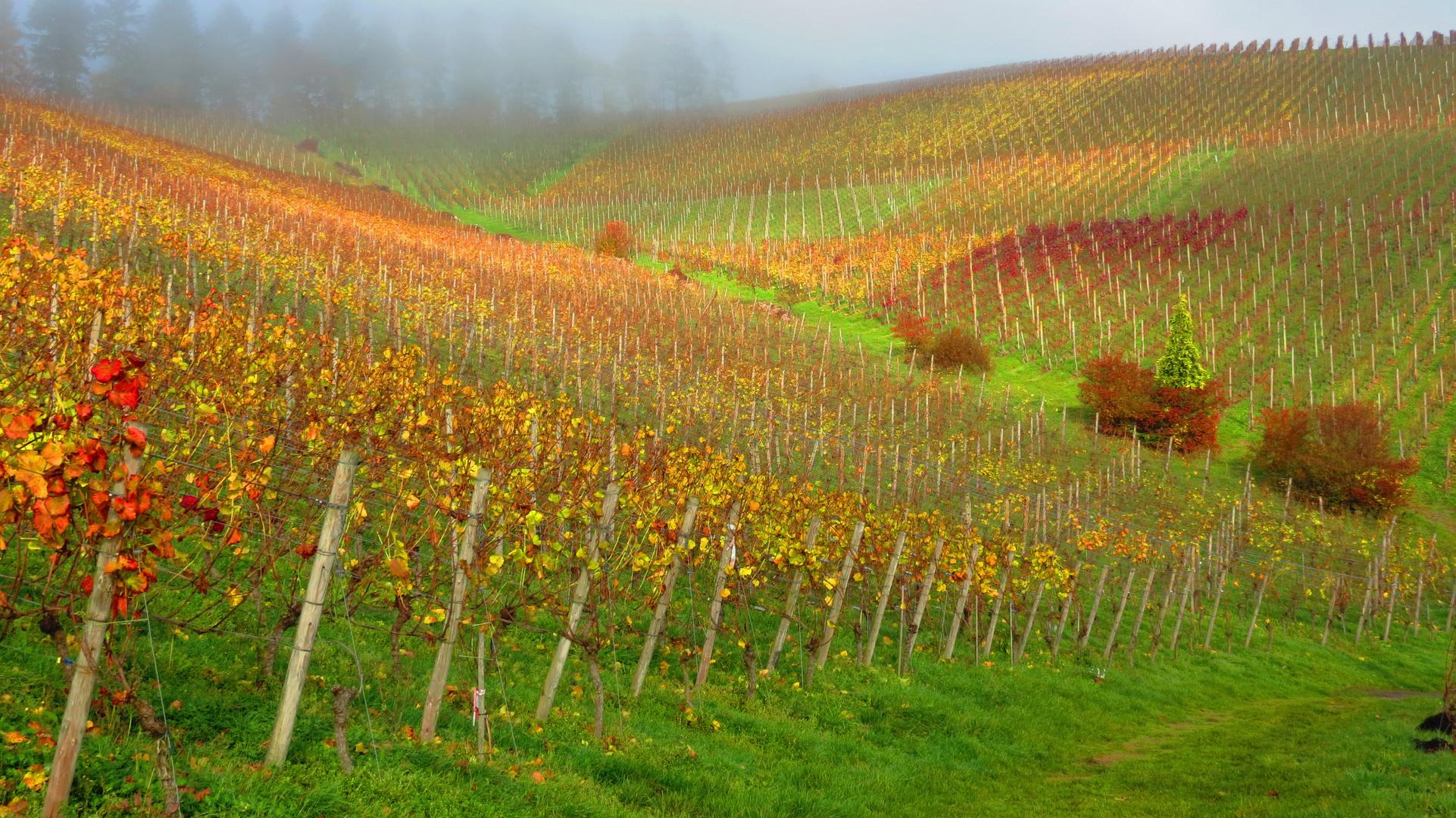 Vignoble et Automne
