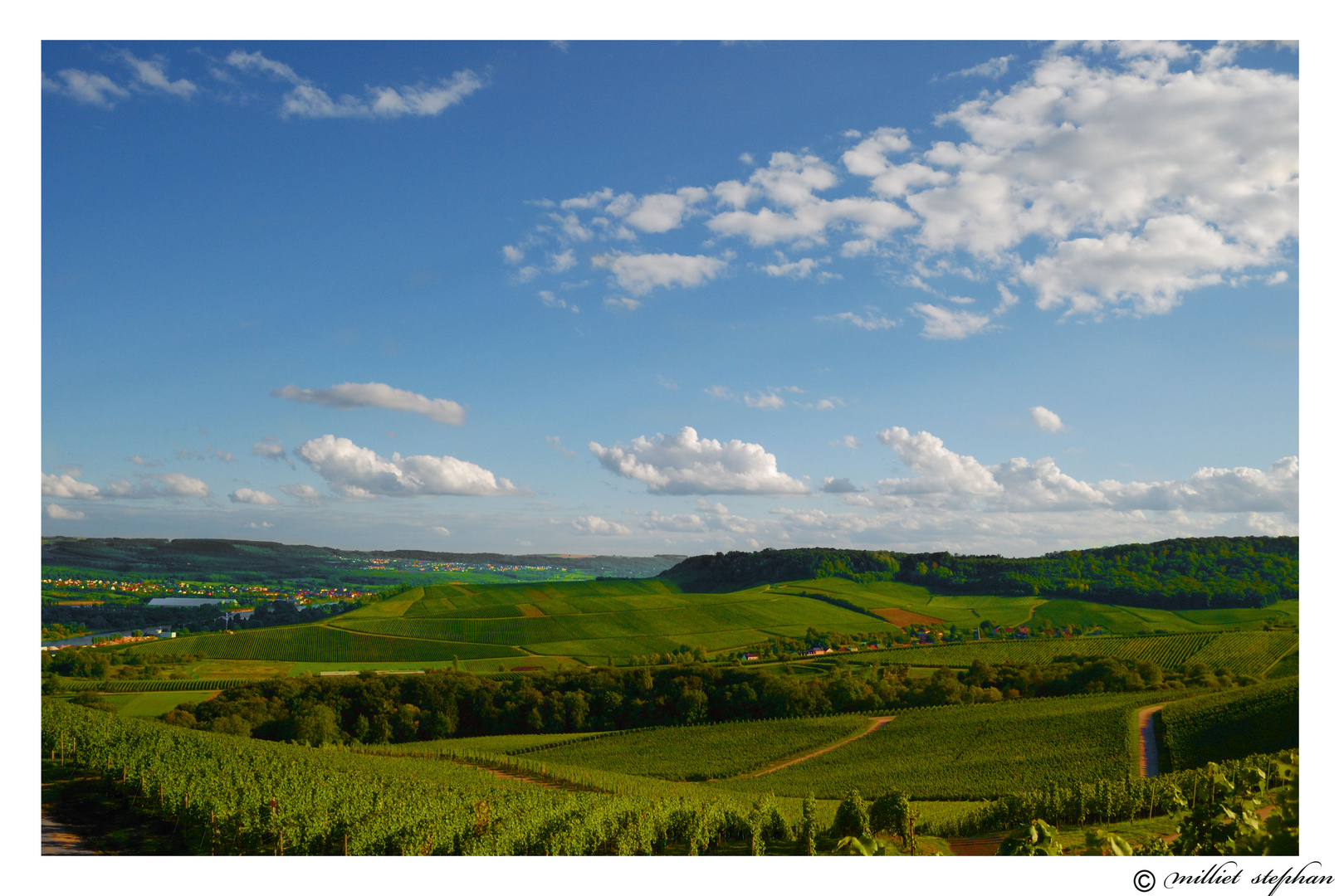vignoble luxembourgeois