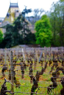 Vignobles bourgignons