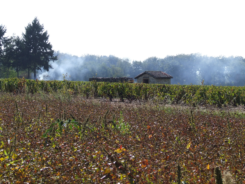 Vignobles du beaujolais