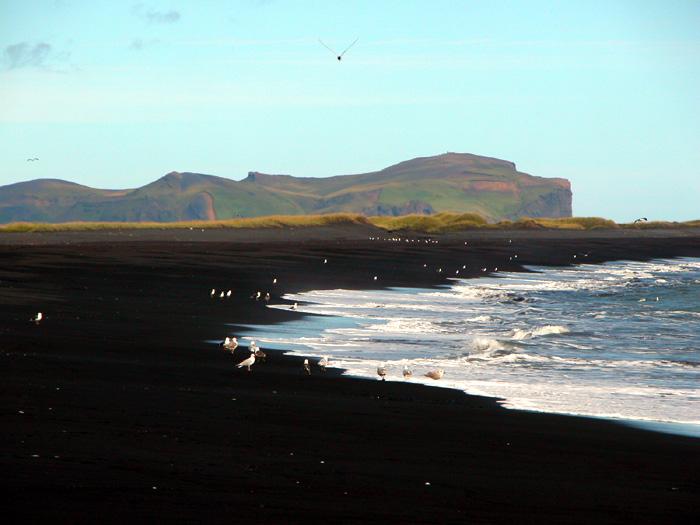 Vik black sand beach, south Iceland