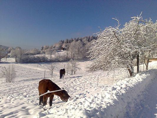 Vilage de Liezey, Vosges