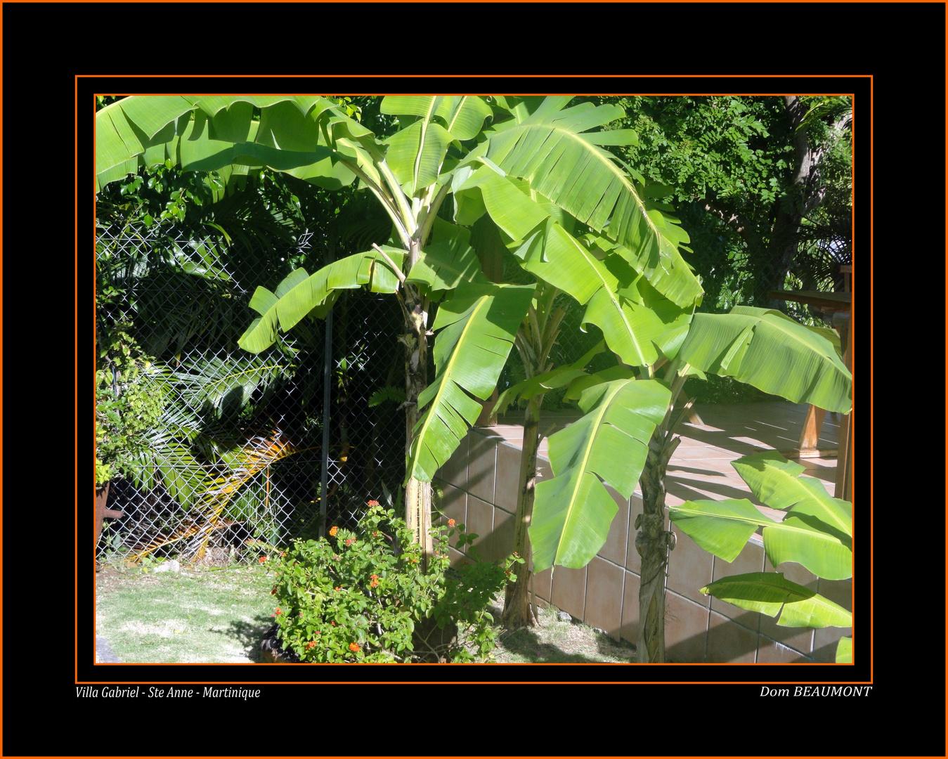 Villa Gabriel - Ste Anne - Martinique