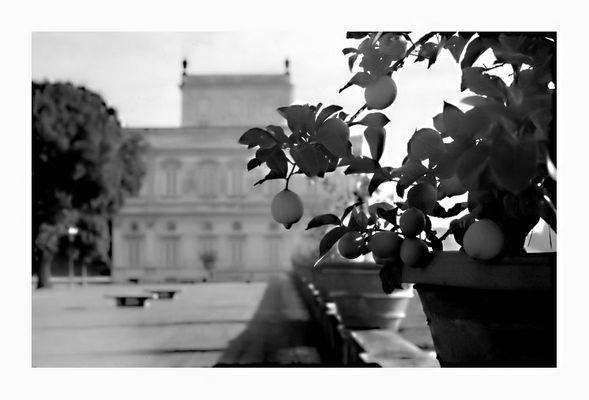 Villa Pamphili Lemon Tree