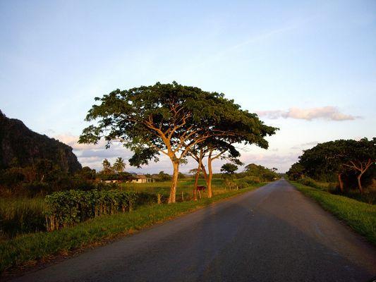 Vinales Tal (Kuba)