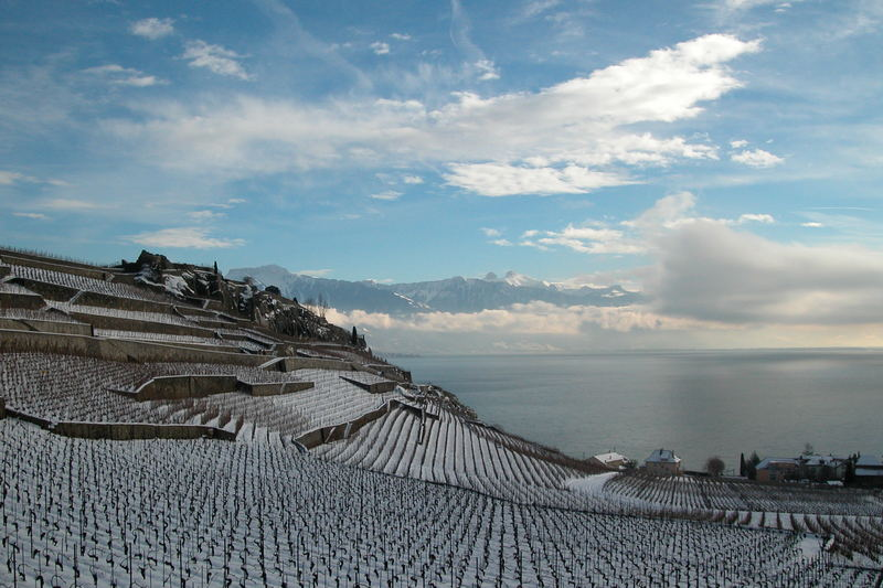Vineyard overlooking Lake Geneva