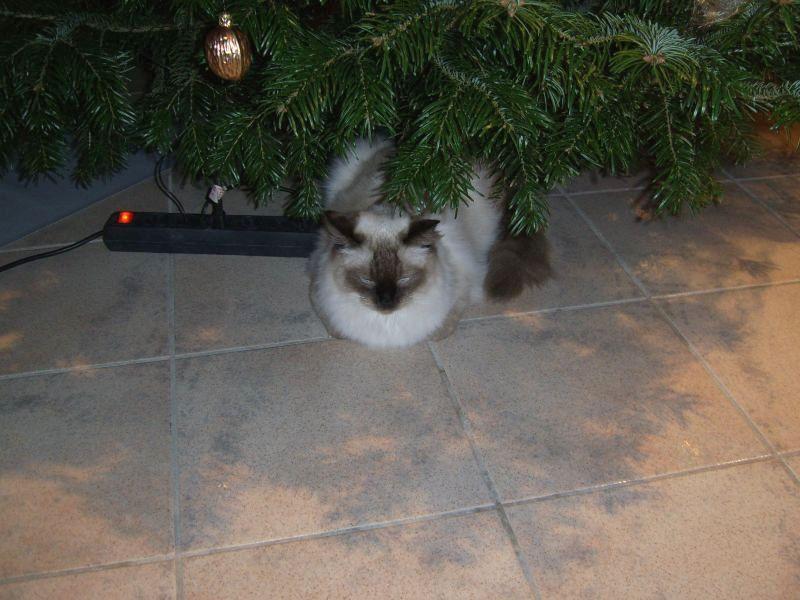 Vinio unterm Tannenbaum
