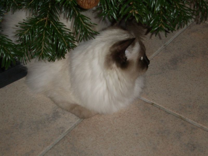 Vinio unterm Weihnachtsbaum