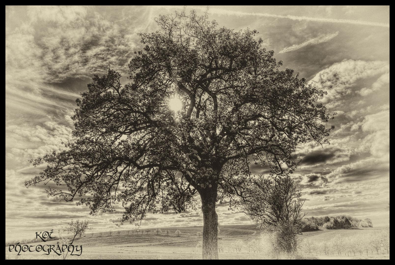 Vintage Baum