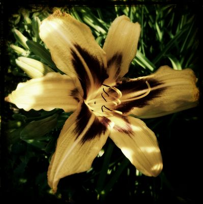 Vintage Blossom_01
