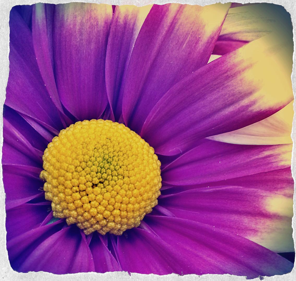 Vintage Blossom_04