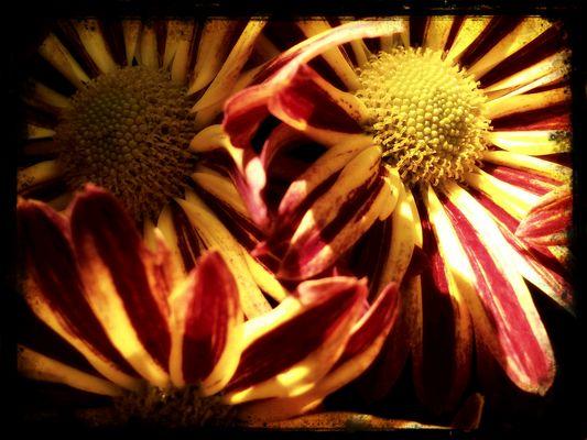 Vintage Blossom_05