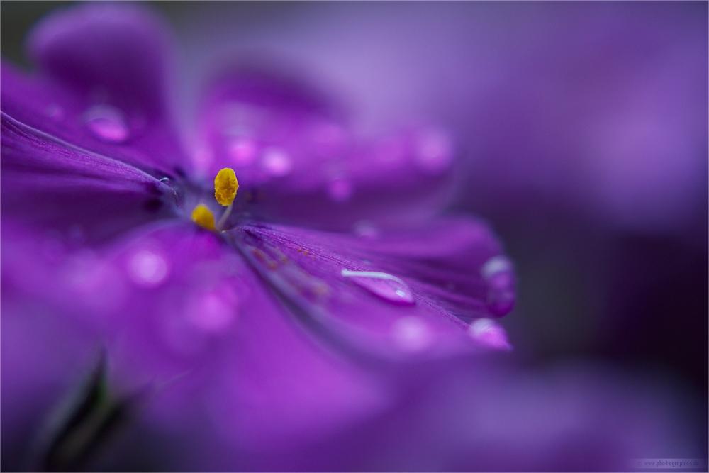 ... violet ...