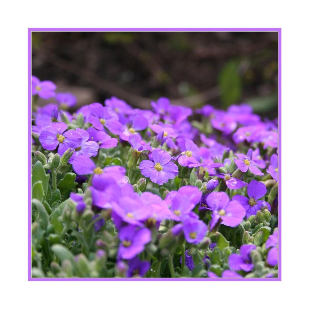 ...violet...