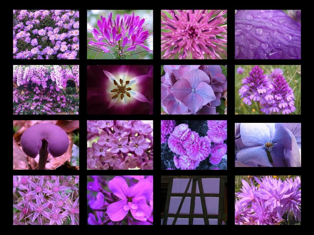 violet comme