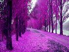 violet...