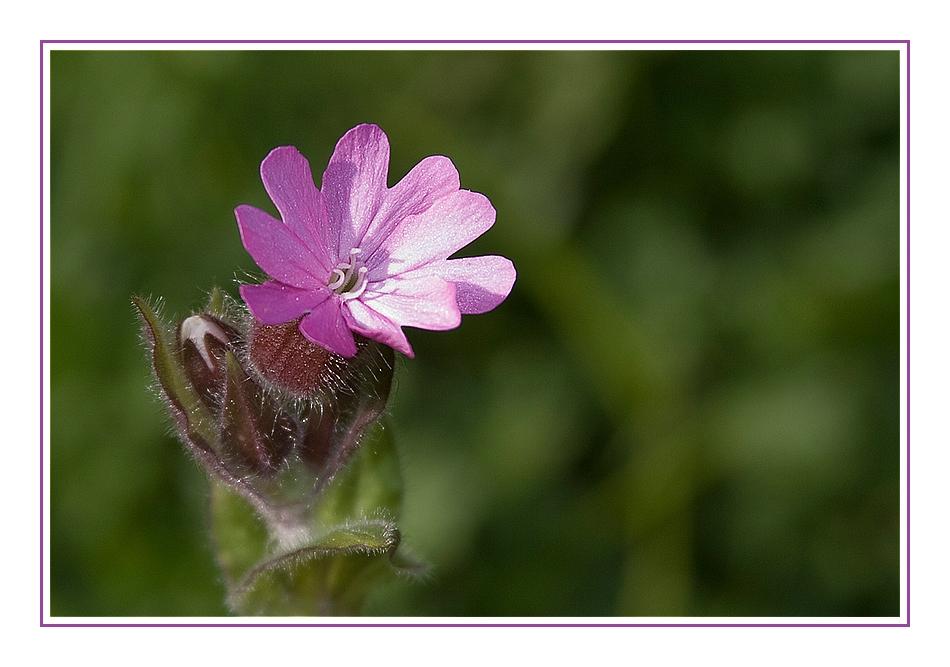 """""""Violet"""" in my garden"""