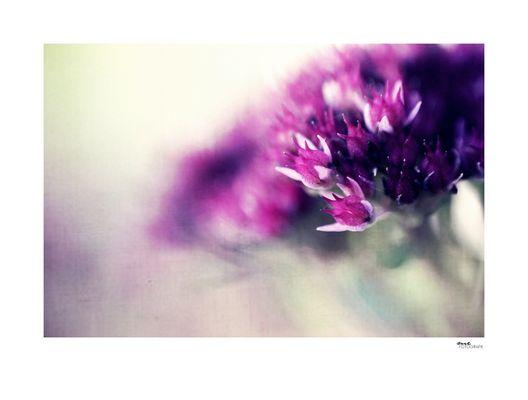 .violet painted.