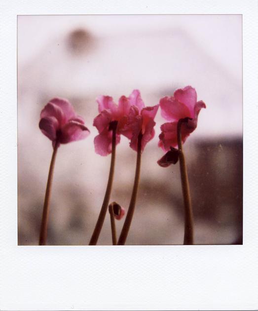 violet.pola...