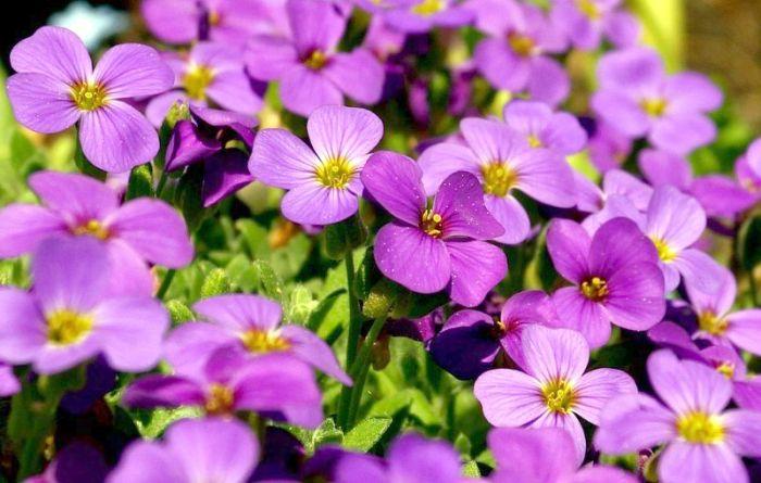 ~ Violett ~