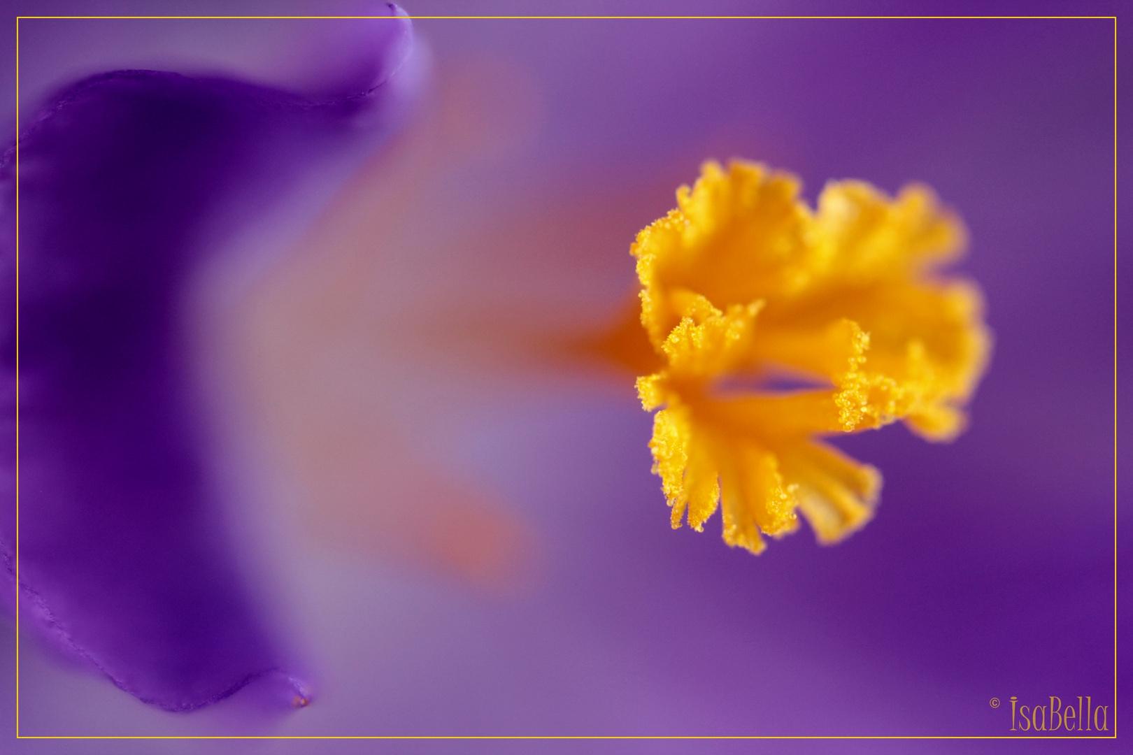 ~Violett-Dream I~
