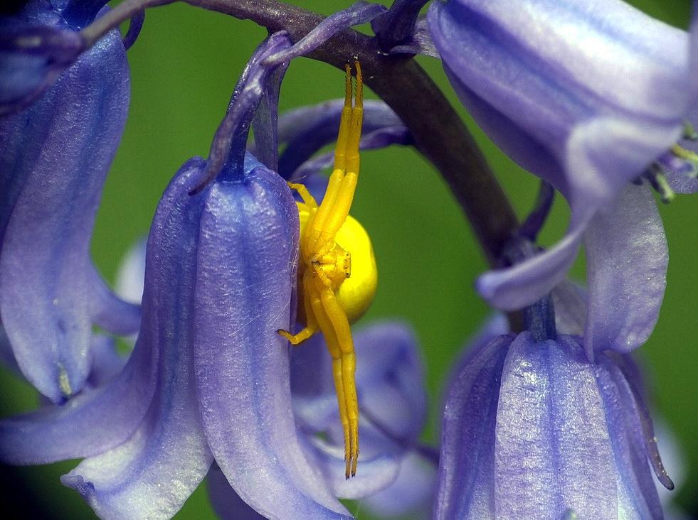 Violett - Gelb
