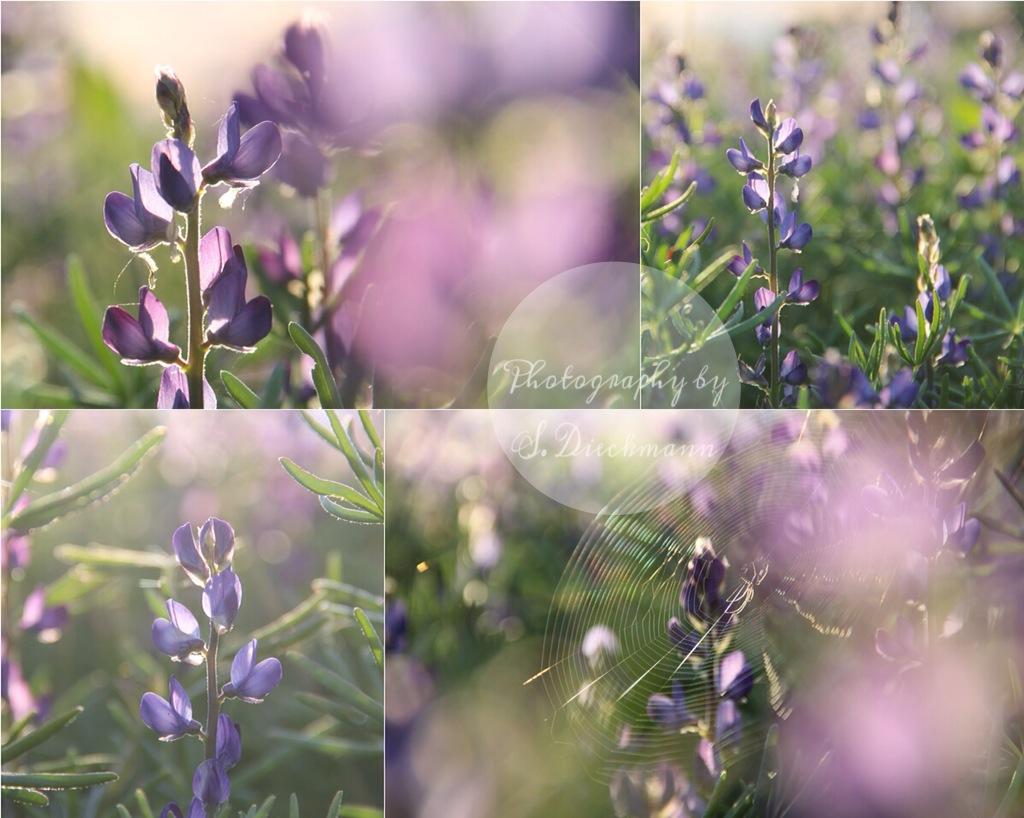 Violett Moments