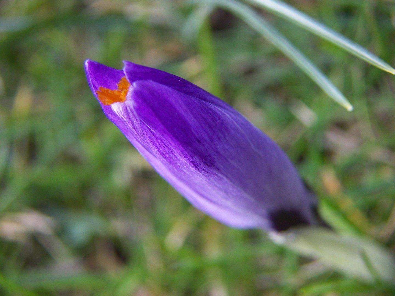 violett things