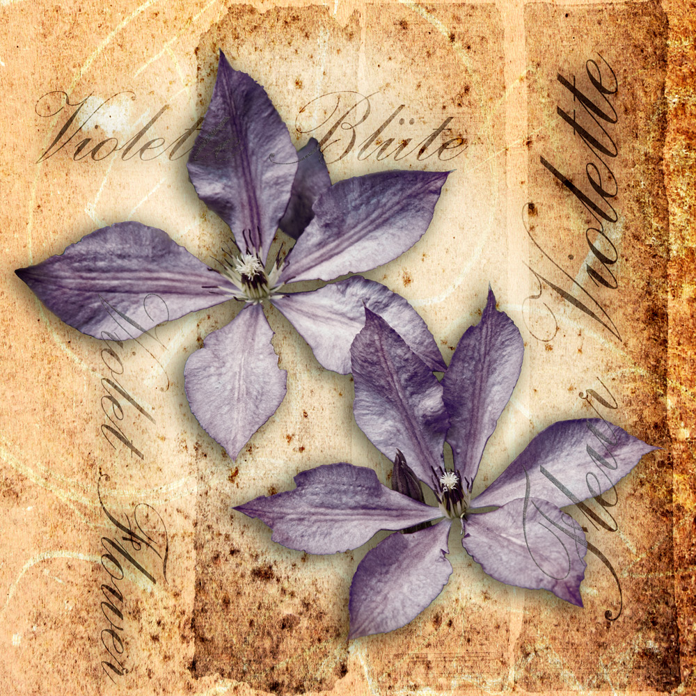 violette Blüten ....