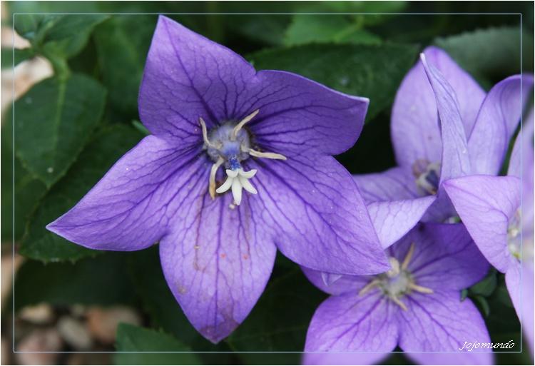 violette mon inconnue