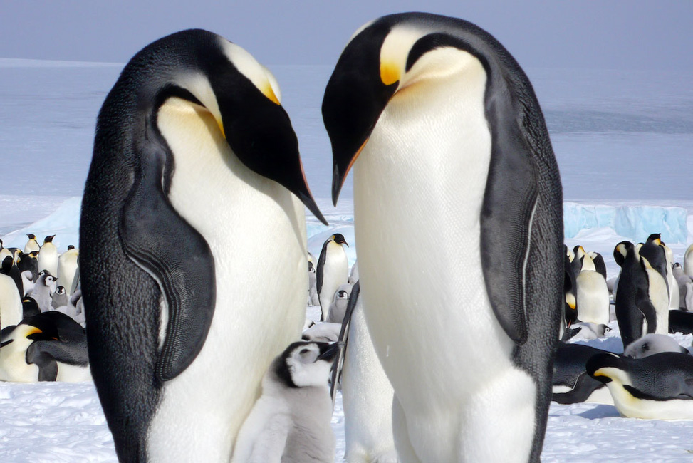 Vision Antarctique (Mer deWeddell)