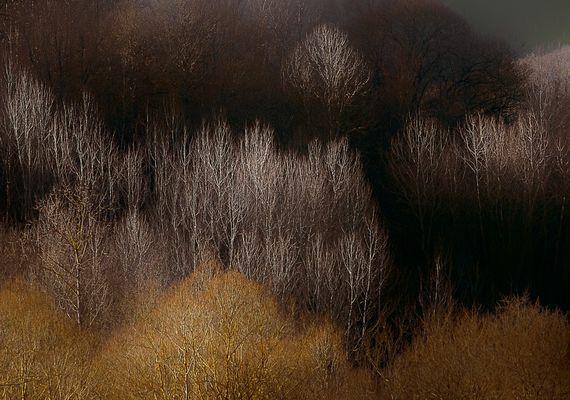 Visione d'alberi