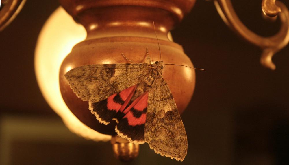 visitor de la nuit
