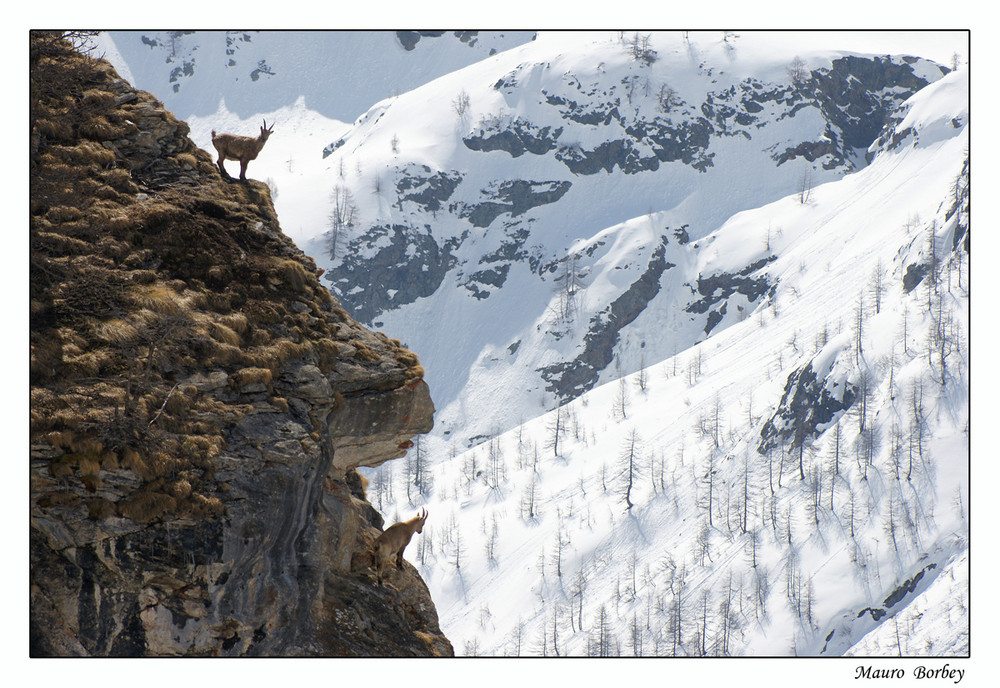 Vita di montagna.