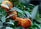 ... Vitamin C ...