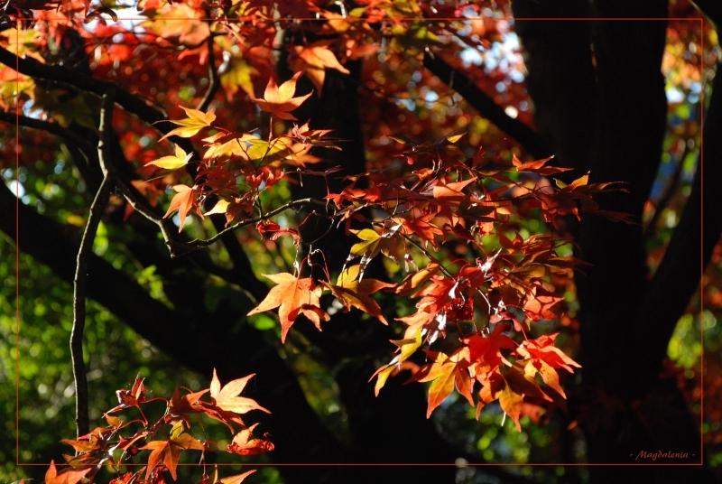 Vitamines d'automne