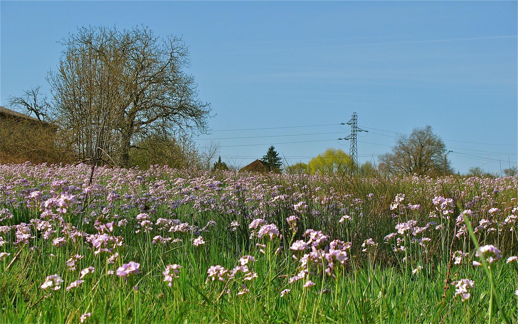 ...Vive le printemps 1 !!!..
