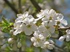 .. Vive le printemps !!!..
