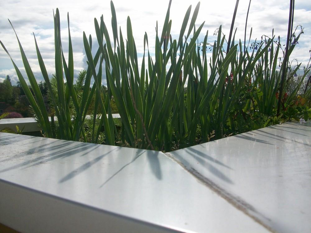vive l'herbe