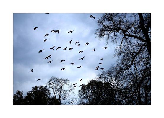 vögel #01
