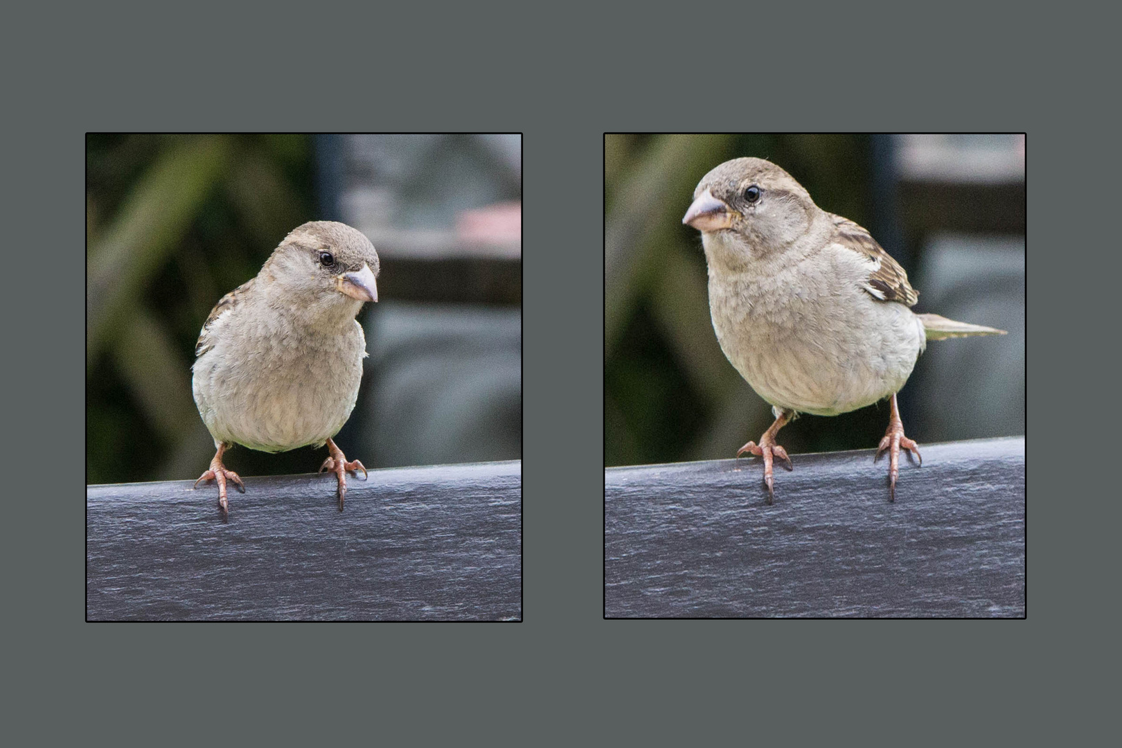 Vögel 08