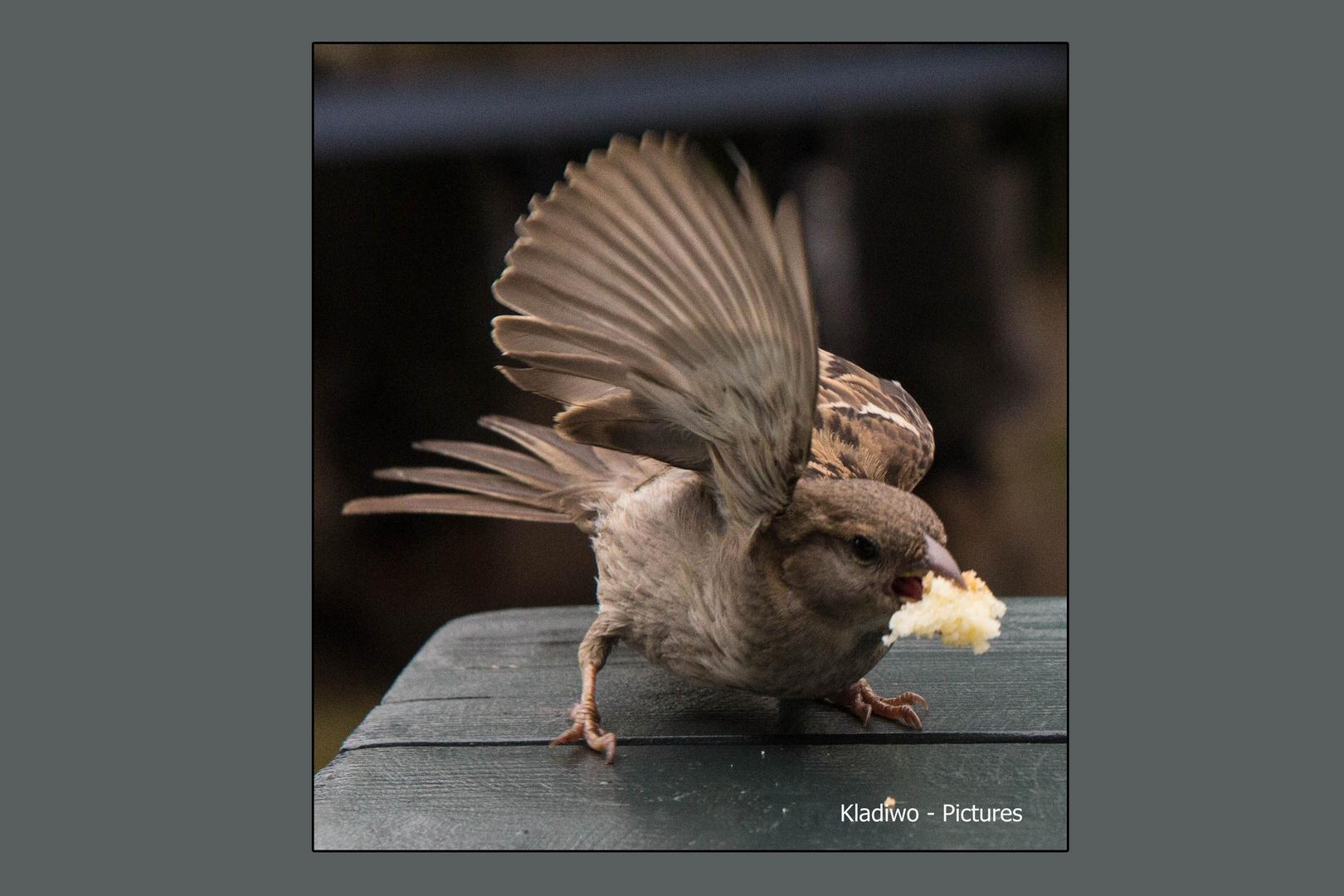 Vögel 09