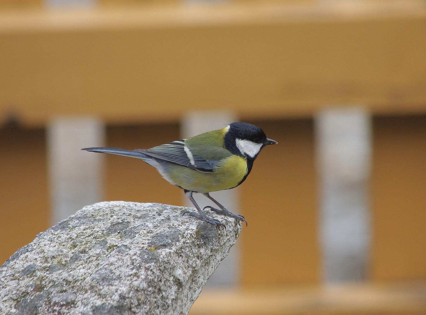 Vögel 1