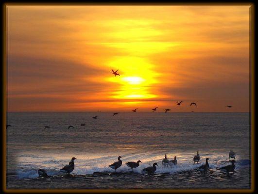Vögel am Abend auf Baltrum