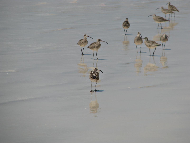 Vögel am Strand Tortuga Bay 2